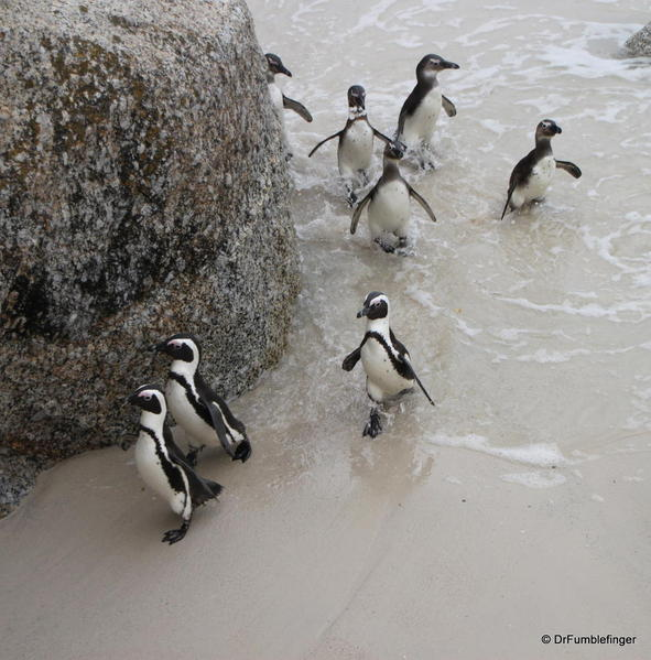 cape-point-046