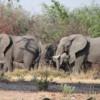 Elephants, Sandibe Concession, Botswana