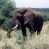 Elephant, Lake Manyara National Park, Tanzania