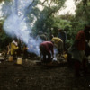 Camp I, in the rainforest on the lower slopes of Mt. Kilimanjaro