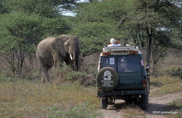 1999 Tanzania Serengetti 001