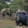 Serengeti National Park, Tanzania: Elephant, viewed on safari