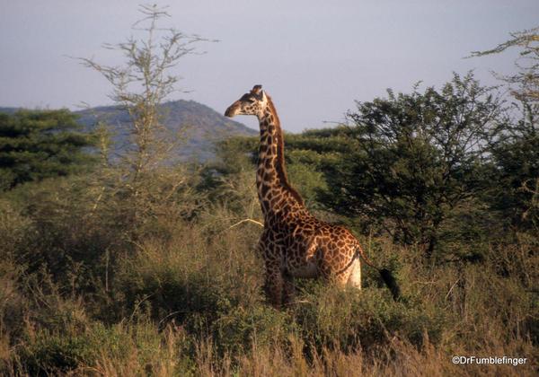 1999 Tanzania Serengetti 012