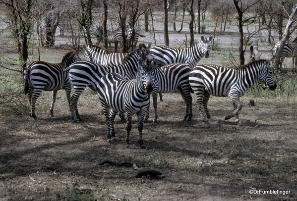 1999 Tanzania Serengetti 013