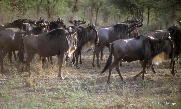 1999 Tanzania Serengetti 017