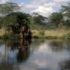 Serengeti National Park, Tanzania: Hippo pool