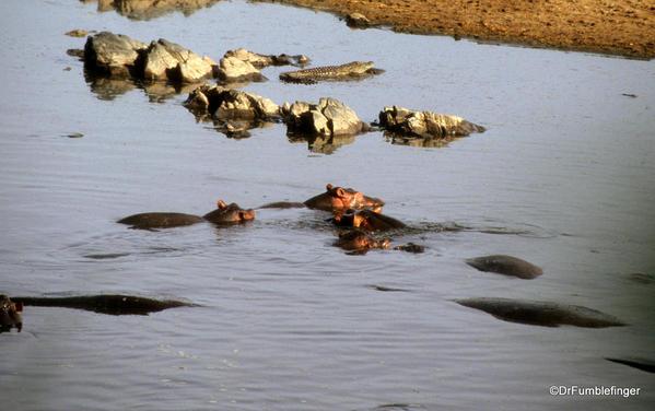 1999 Tanzania Serengetti 024