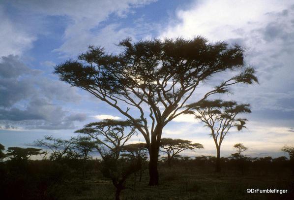 1999 Tanzania Serengetti 033