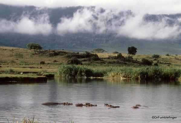 1999 Tanzania 008. Ngorongoro Crater. Hippos