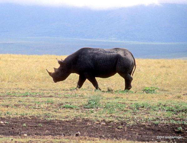 1999 Tanzania 017. Ngorongoro Crater. Black Rhino