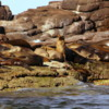 Sea Lion Rookery, Los Islotes, Sea of Cortez