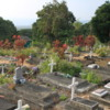 "St Benedict's ""Painted Church"" cemetery: A picturesque cemetery in a tropical setting."