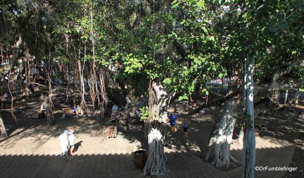 West-Maui-2013-018-Lahaina Banyon Tree