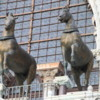 Venice -- St. Mark's cathedra: The elegant bronze horses were bootie. These are copies but the originals are in a museum inside of the church. They are thought to be over 2000 years old.