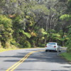 Road through rainforest, Volcanoes National Park: A lovely stretch of road, framed by lush forest.  Note the giant ferns