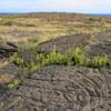 Pu'uloa Petroglyph Trail, Volcanoes National Park
