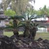 Hilo -- Japanese Gardens at Lili'uokalani Park
