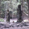 Lava Tree State Park, near Hilo, Hawaii: These hollow lava structures were formed by molten lava cooling against tree trunks and hardening while the liquid lava drains. The tree rots away leaving a hollow dark lava sentinel.