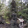 Lava Tree State Park, near Hilo, Hawaii: A person provides a good size perspective on the lava trees