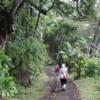 Hiking through the jungle on the Hamakua Coast