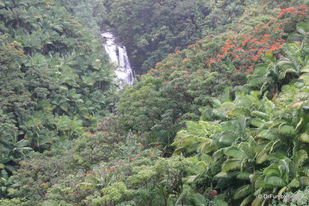Rainforest On The Big Island: The Big Island Of Hawaii (Part 2). Hilo & Hamakua Coast