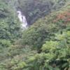 Lush rainforest in the Hamakua Coast