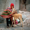 Mother, son and baby alpaca, Sullustani National Monument, Peru