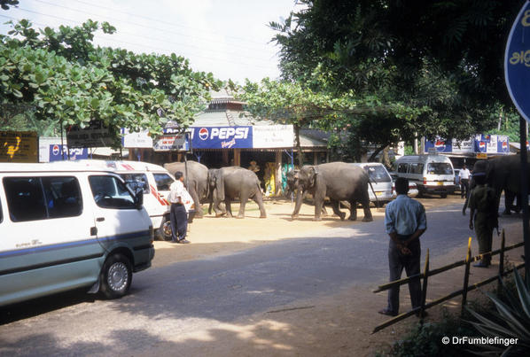 pinnawala-sri-lanka-021