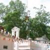 Anuradhapura -- Bodhi tree: Many prayer flags decorate the plaza