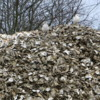 Pile of oyster shells, Oysterville, Washington: Sea gulls everywhere