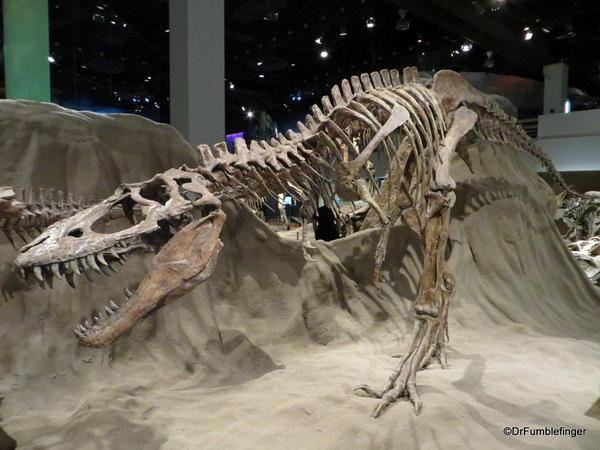 Alberta 028 Royal Tyrell Museum, Albertasaurus