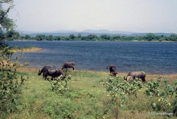 Sri-Lanka-2001-Polonnaruwa-046