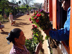 Burma-flowers