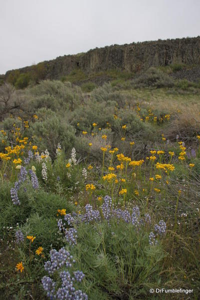 Steamboat Rock State Park -- wildflowers
