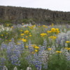 Steamboat Rock State Park -- wildflowers: A highlight of this hike was the abundance of wildflowers on top of the Rock