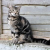 """Lovely cat in Kenmare.: Love those """"Irish eyes""""!  I almost packed her into my bag to bring home with me"""