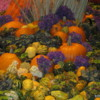 Harvest display, brightly colored, lovely to behold.  Las Vegas, Nevada