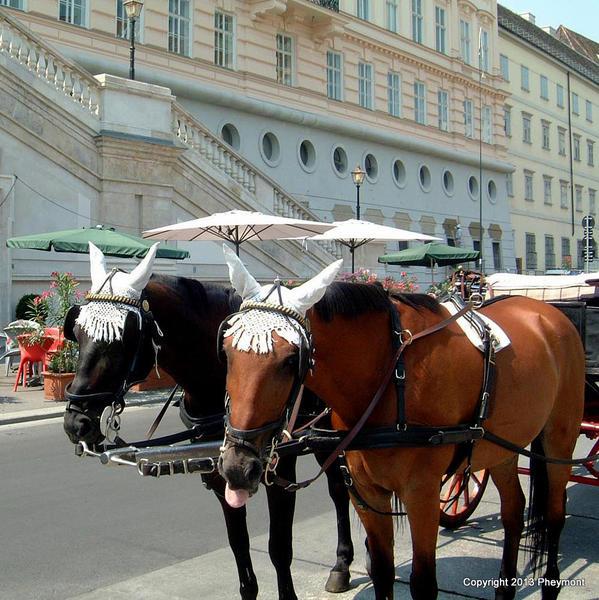 1-Vienna-64