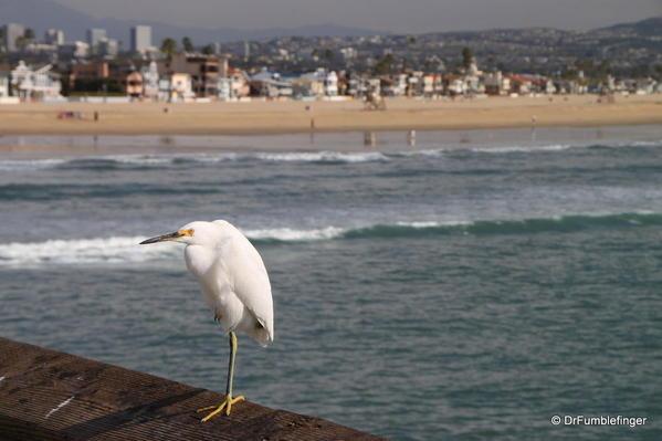 Winter 2010 340 Newport Beach Pier.