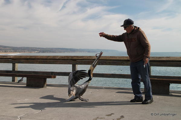 Winter 2010 347 Newport Beach Pier. Pelican
