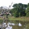 Yala National Park -- Crocodile lagoon