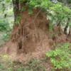 Yala National Park -- Termite nests
