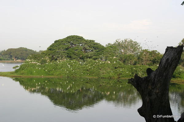 Tissimihara --Bird Island