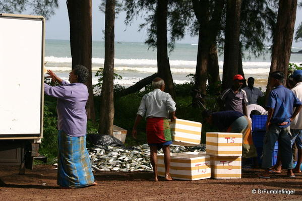 Packing fish for the market