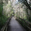 Florida Everglades Big Cypress Bend Boardwalk