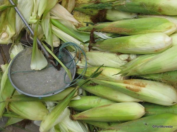 Corn & scale.