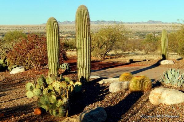 Prickly, saguaro, golden barrel, agave
