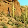 Saguaros in Tucson Mountain Park