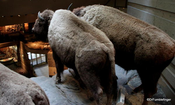Head-Smashed-In-Buffalo Jump exhibit