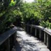 Everglades National Park, Shark Valley, Bobcat Trail